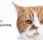 2人で月額3,488円のY!mobile(ワイモバイル)を使ってみて