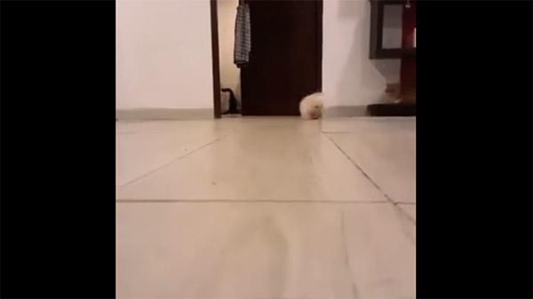 一度、奥の方に走って行ってから戻ってくるモフモフ猫ちゃん。