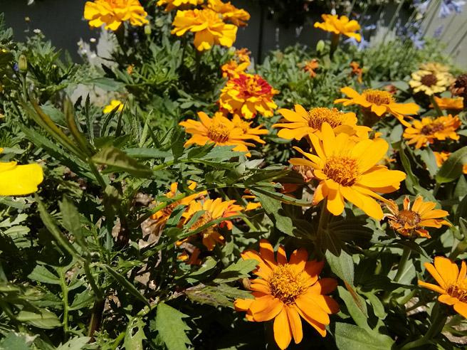 タップにより焦点を合わせて、ぼかし具合を調整できます。 まずは手前の花に焦点を合わせた写真