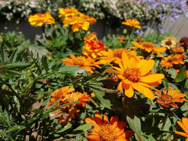 「ワイドアパーチャ」の機能で手前の花に焦点を合わせた場合