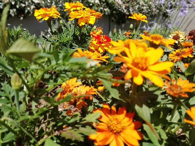 「ワイドアパーチャ」の機能で奥の花に焦点を合わせた場合