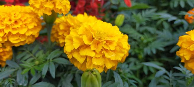 次は、花をマクロモードで撮影してみます。被写体の近くに寄り、ピントを合わせたい場所をタップすることで、背景にぼかしがかかります。