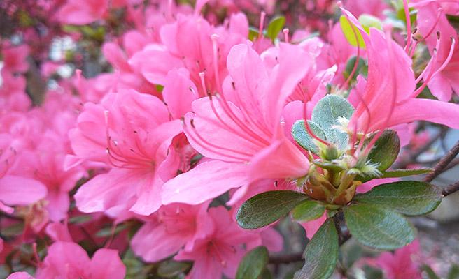 今度は花を撮影してみました。AI判定では特に「花」とかにはならないのですね。